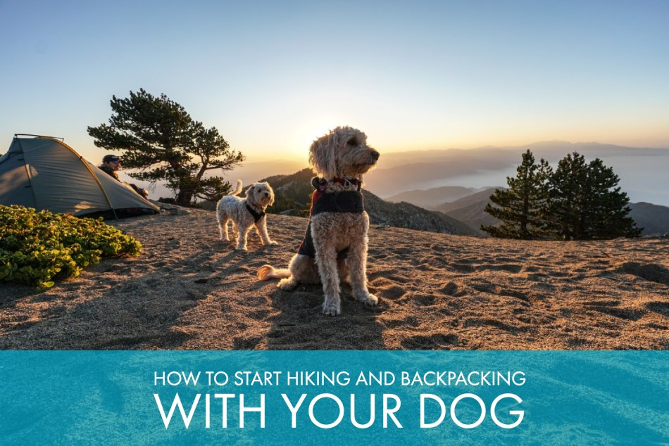 Backpacking and Hiking with Your Dog